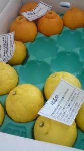 有機野菜ぶどうの木 鶴田さんの柑橘セット