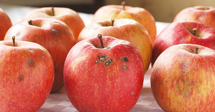 有機栽培・特別栽培と規格外の果物について