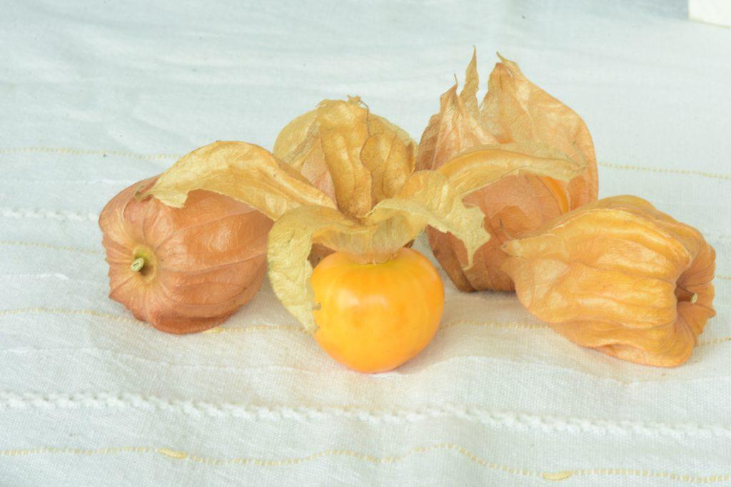 食用ほおずき 長野県産 有機栽培