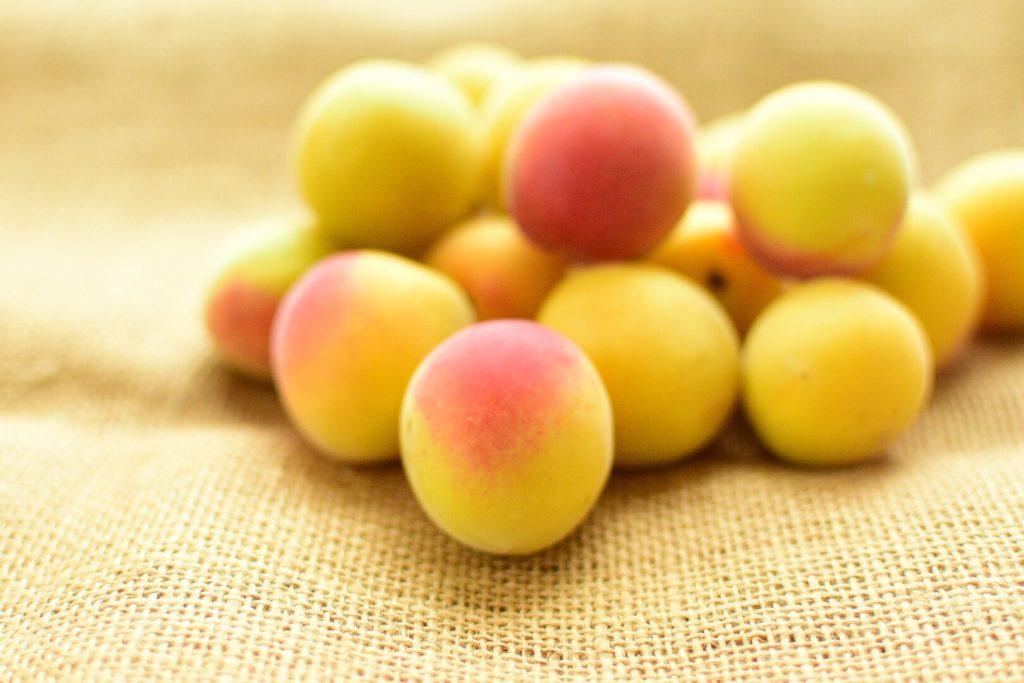 有機栽培 完熟梅