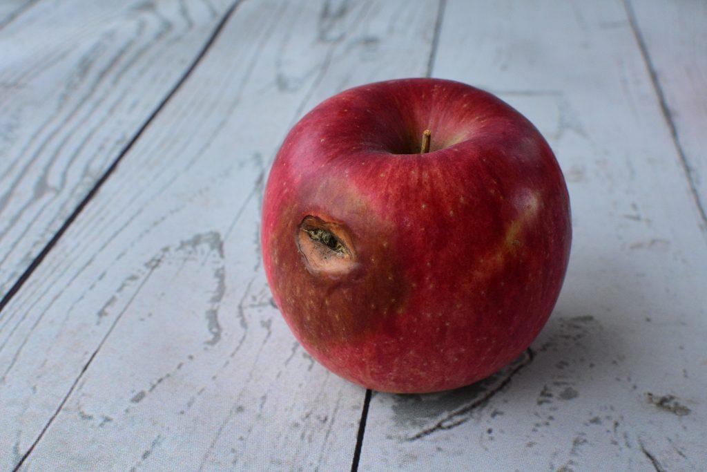 有機栽培リンゴ 訳あり