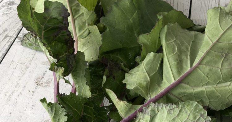 有機栽培 のらぼう菜