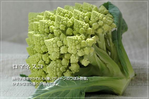 幾何学模様がかわいい薄いグリーンのつぼみ野菜。かすかな甘い香りが魅力です。 ロマネスコ有機JAS認定